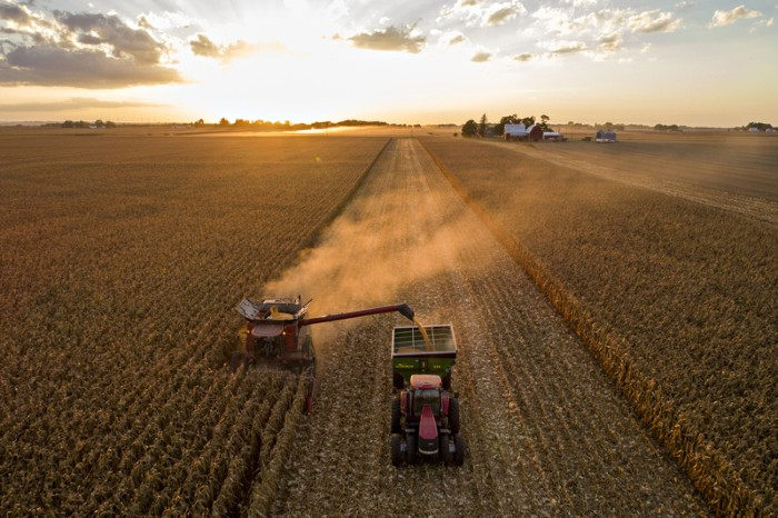 Corn is harvested with a combine harvester in Princeton, Illinois
