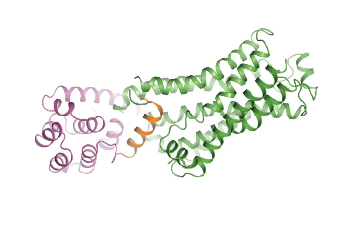 The crystal structure of the beta 2-adrenergic receptor bound to the G protein adenylyl cyclase stimulatory G protein