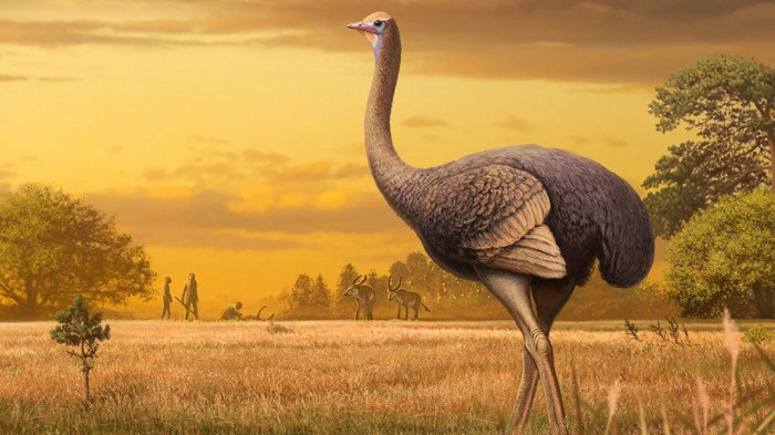 An artist's impression of a giant bird which has been discovered in Crimea