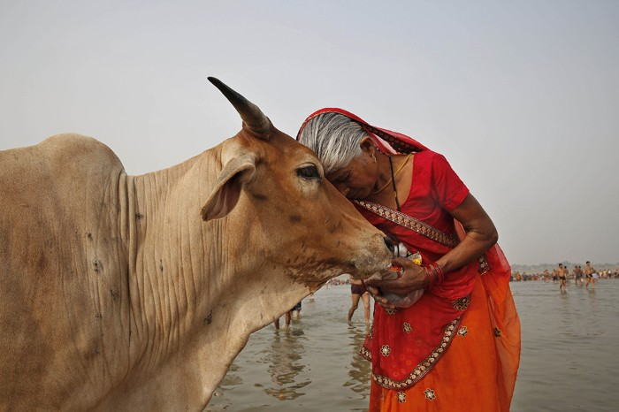 Image of a Woman and Cow