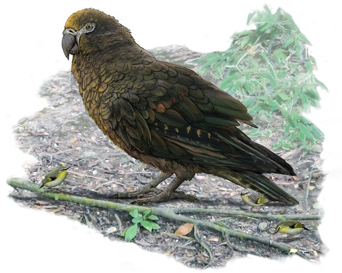 Artist impression of a giant parrot