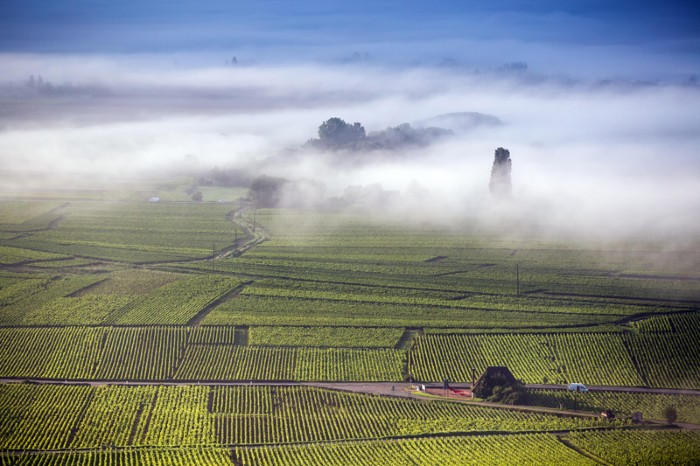 Aerial view on a misty day over vineyards in Côte de Beaune, Burgundy, France.