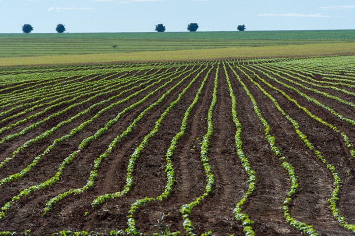 A soybean field in the Cerrado plains in Mato Grosso state, Brazil.