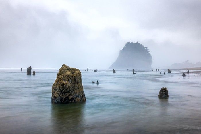 Ghost Forest in Neskowin, Oregon