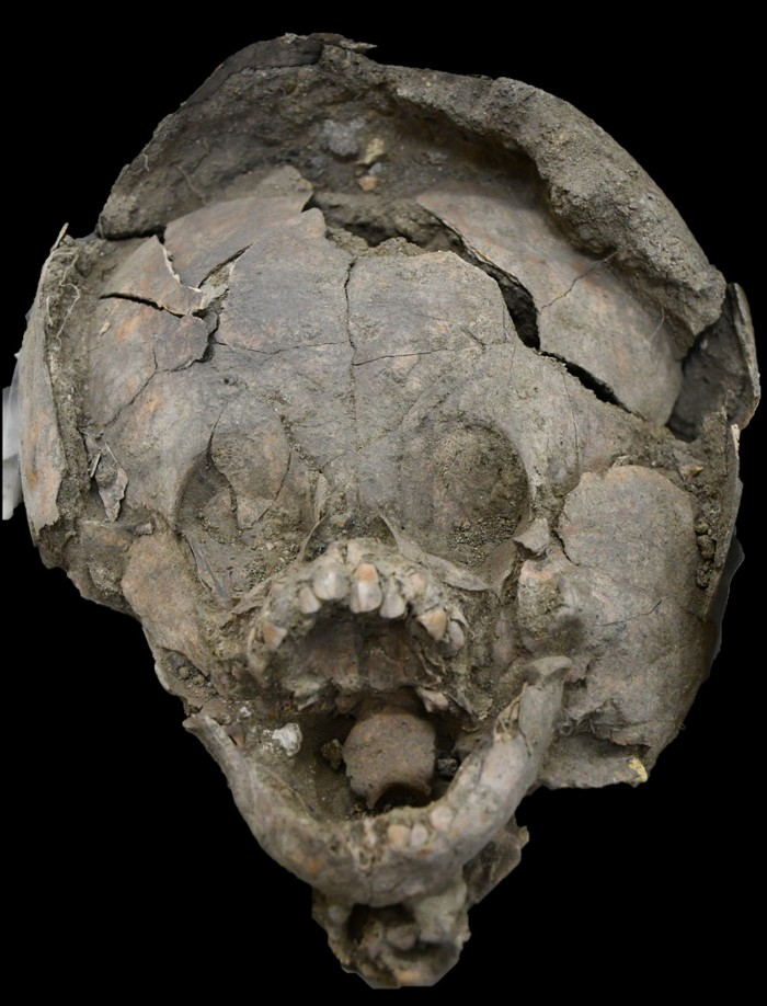 Infant burial 370, showing an additional cranium surrounding the primary individual's skull.