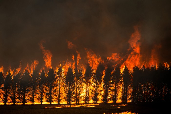 The Dunns Road Fire crowns the tops of a trees close near Maragle, Australia