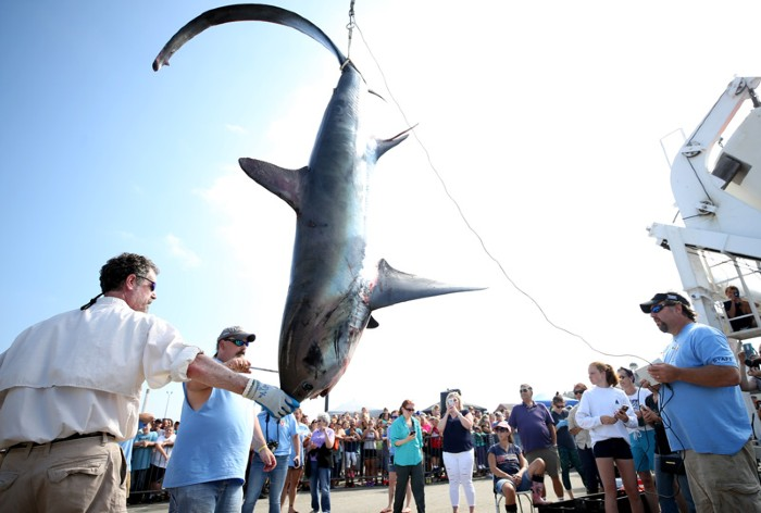 North Atlantic Monster Shark Tournament.