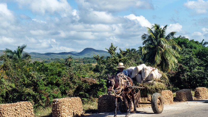 Cuban farmer travelling in a loaded donkey drawn cart.