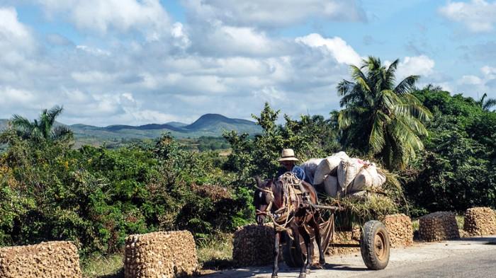Cuban farmer travelling in a loaded donkey drawn cart.