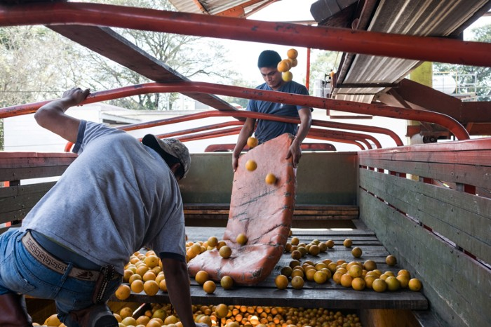 Two workers unload oranges from a truck at a weighing facility in the town of Axtla de Terrazas, San Luis Potosi, Mexico