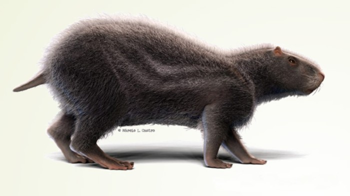 Artistic reconstruction of N. Acreensis (by Márcio L. Castro).