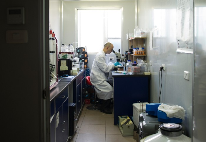 Li Hua sits at his lab bench looking down a microscope
