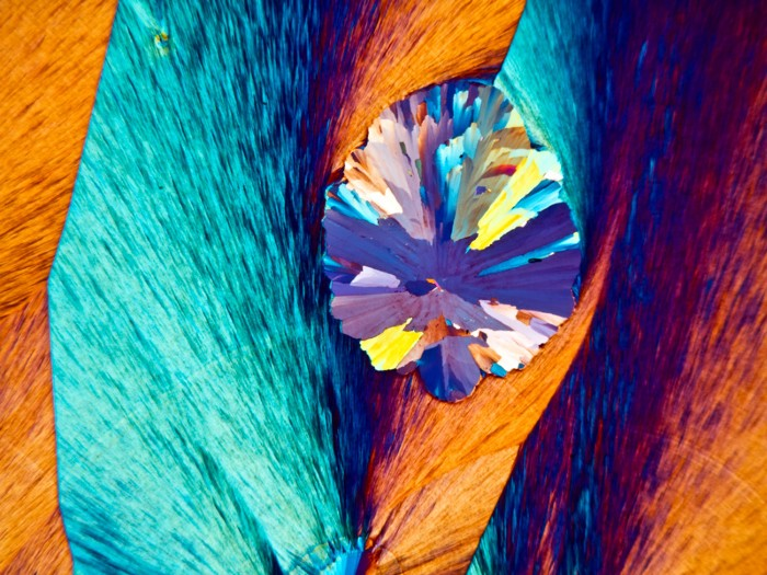 Paracetamol crystals, polarised light micrograph of paracetamol (acetaminophen) crystals.