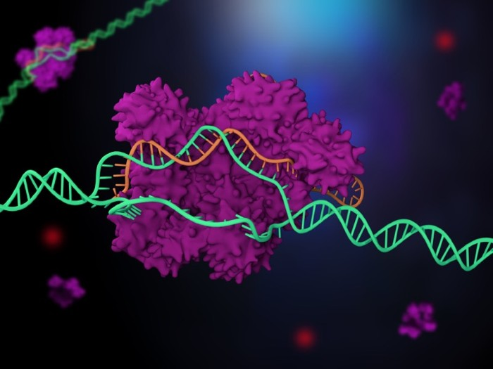 3D render of a purple enzyme using an orange guide RNA to split apart and cut the strands of a green DNA helix.