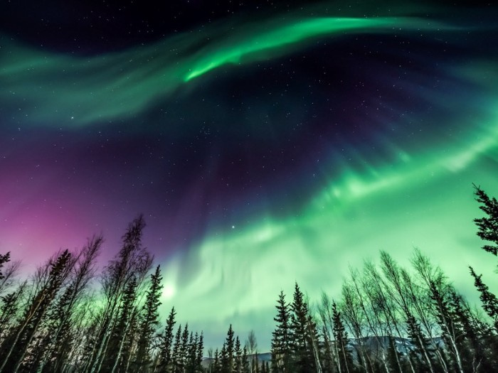 Aurora borealis over tree line in Fairbanks, Alaska.