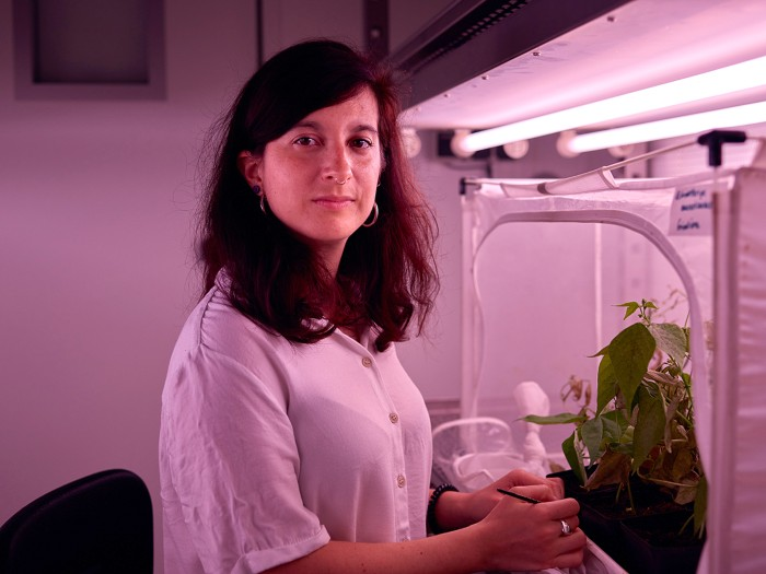 Giuditta Beretta works in her lab of the greenhouse where she studies mites.