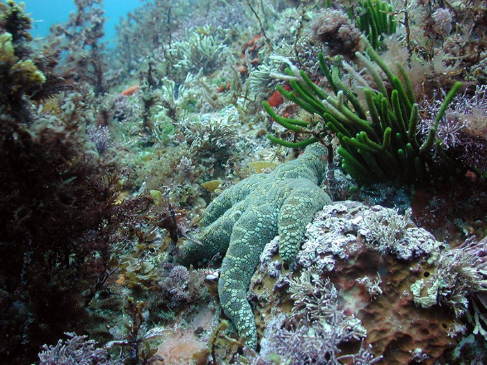A starfish and other marine organisms in an underwater ecosystem.