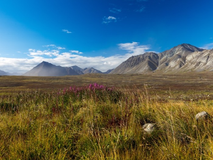 A stretch of tundra covered in grasses, with mountains in the distance.