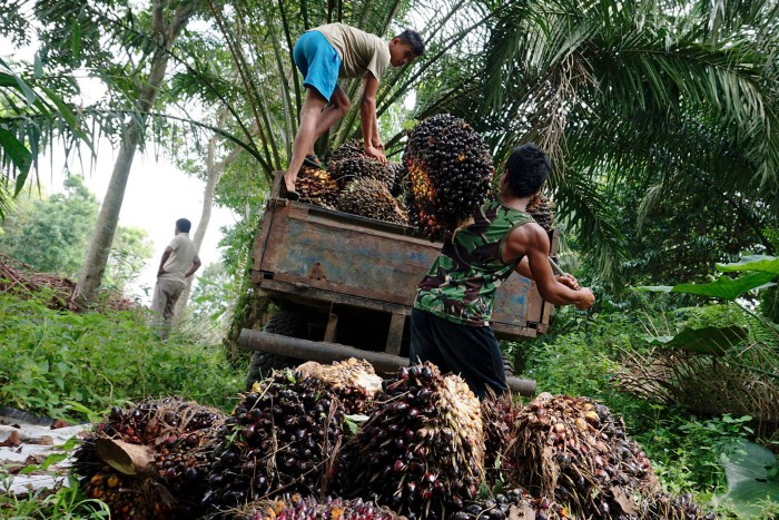 Workers load palm fruits onto a truck at a plantation North Sumatra, Indonesia