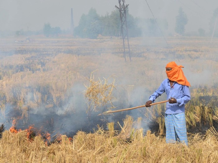 An Indian farm labourer burns paddy stubble in a field on the outskirts of Amritsar, India.