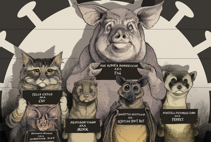 Cartoon of a cat, bats, ferret, mink and pig holding name cards as if in a police lineup with a virus shaped spotlight on them