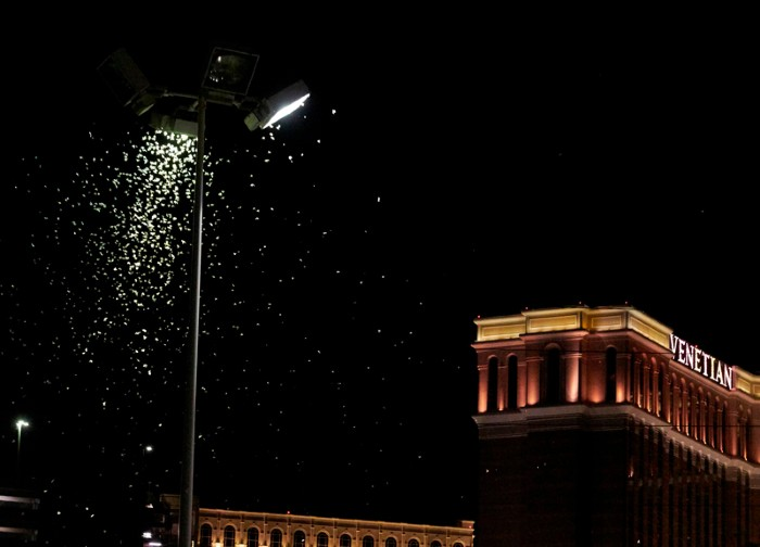Grasshoppers swarm a light a few blocks off the Strip in Las Vegas, Nevada