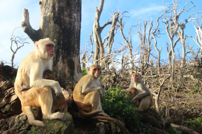 Female macaques and their infants, sitting close to one another in a bare landscape