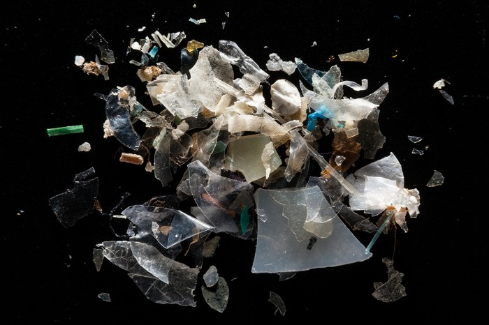 Microplastics from the Magothy River are pictured at the laboratory of Dr. Lance Yonkos at the University of Maryland.