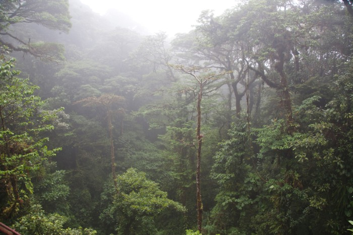 Monteverde Cloud Forest Preserve, Costa Rica