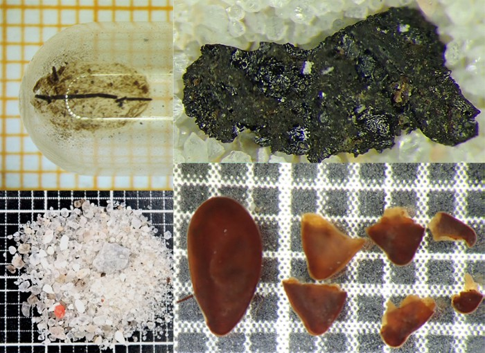 Selected materials found in the gut contents of Tollund Man