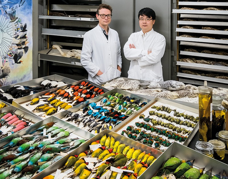 Tom Gilbert and Zhang Guojie stand behind a large array of preserved bird specimens