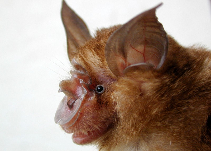 Bat cave solves mystery of deadly SARS virus — and suggests new
