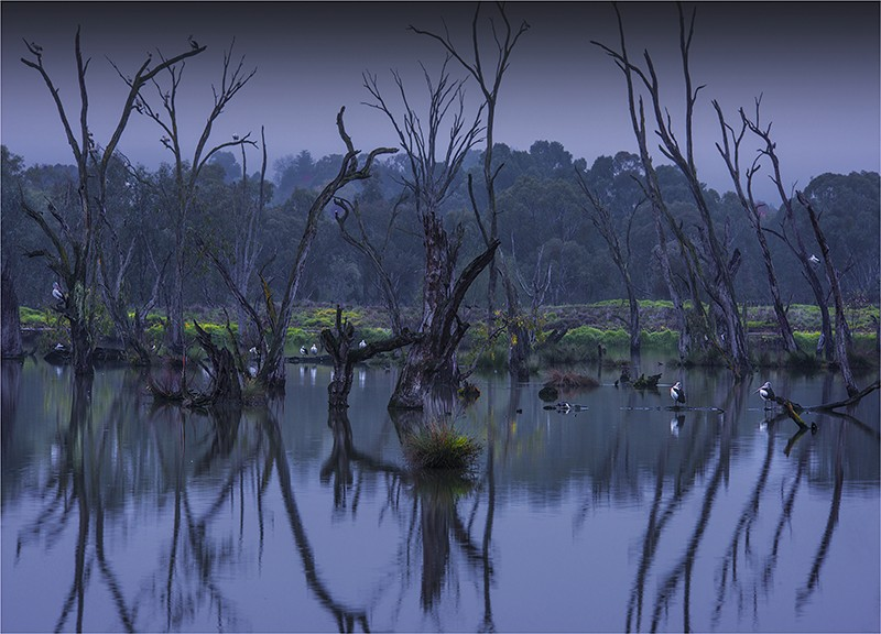 Murray river with trees and birds