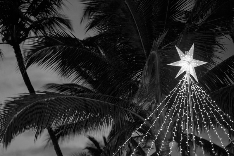 A Christmas star surrounded by palm trees