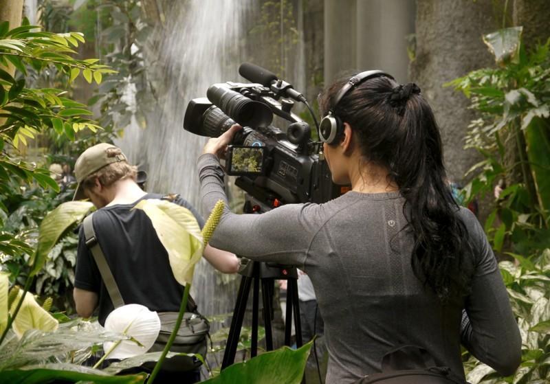 Filming butterflies