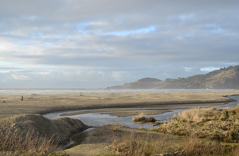 A marshy field on the Oregon Coast in the early evening.