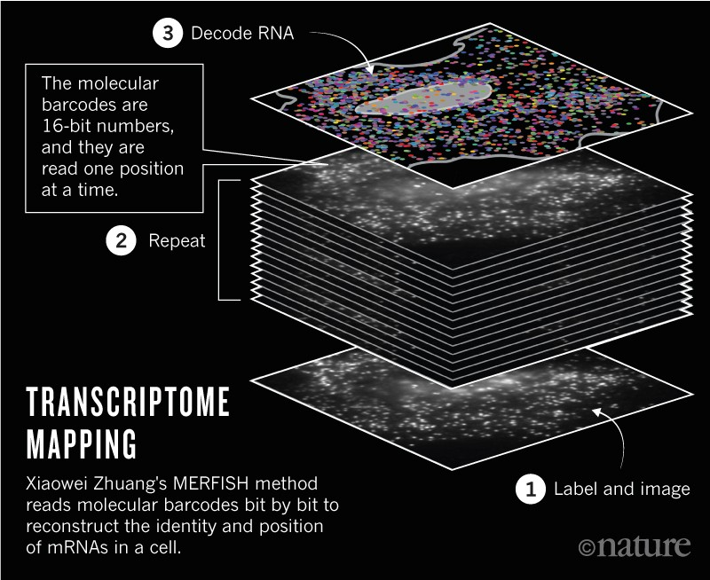 Graphic showing how transcriptome mapping works