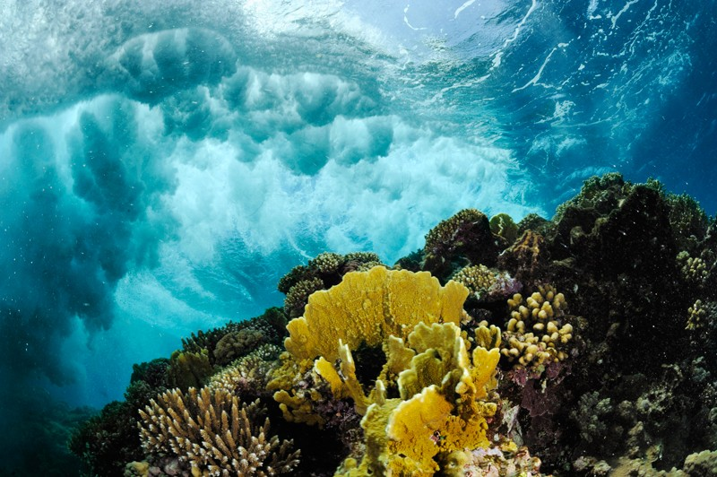 Wave crashing over coral reef