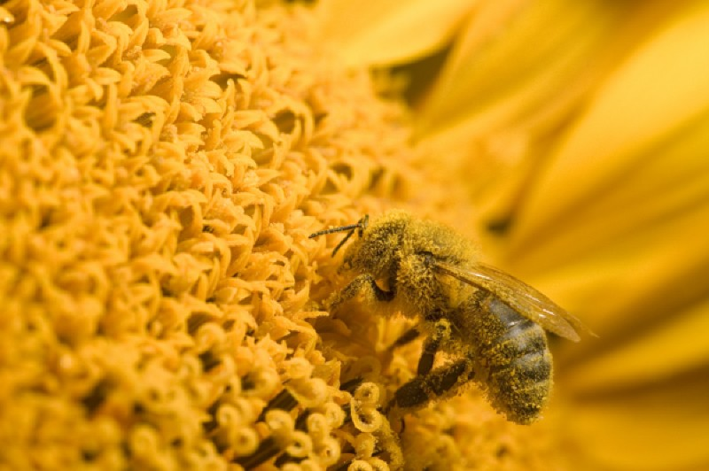 Why Europe's Insecticide Ban Is Big News for Bees