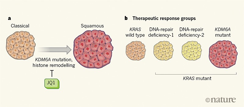 Pancreatic cancer foiled by a switch of tumour subtype