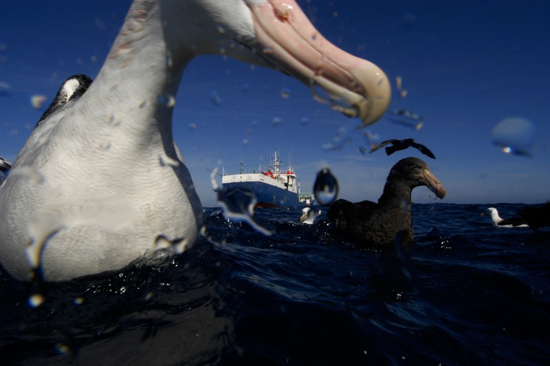 A toothfish longliner surrounded by sea birds