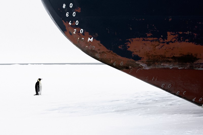 Emperor Penguin and Icebreaker