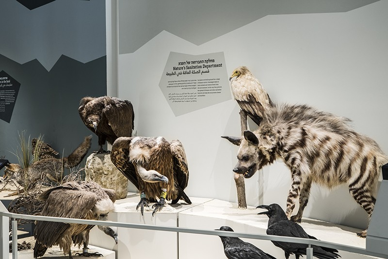 Stuffed specimens of hyenas, vultures and other carrion eaters gaze down at a hidden food source.