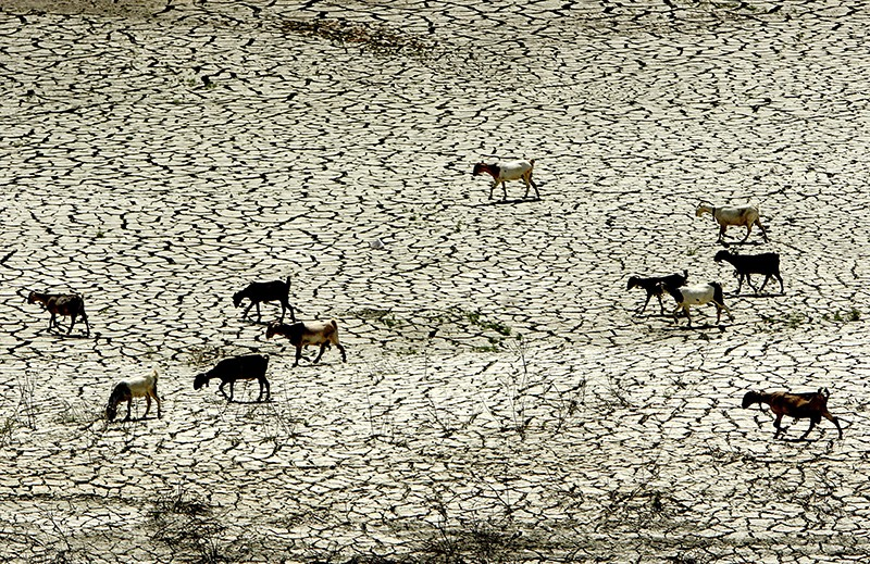 Sheep cross a parched cracked expanse in Cyrpus in 2007.
