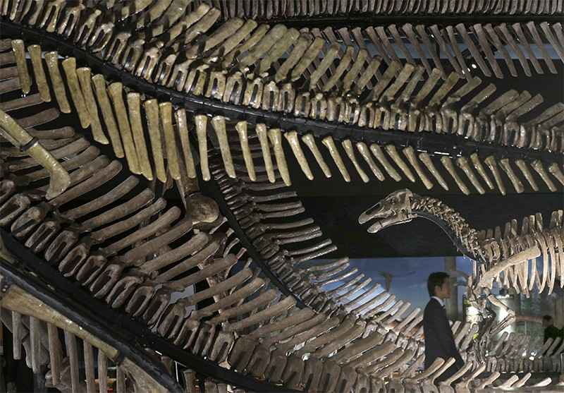 A man walks amongst replicas of dinosaur skeletons at a 2012 exhibition in Tokyo.
