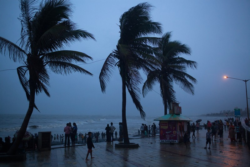 Palms swaying in the wind in Mumbai