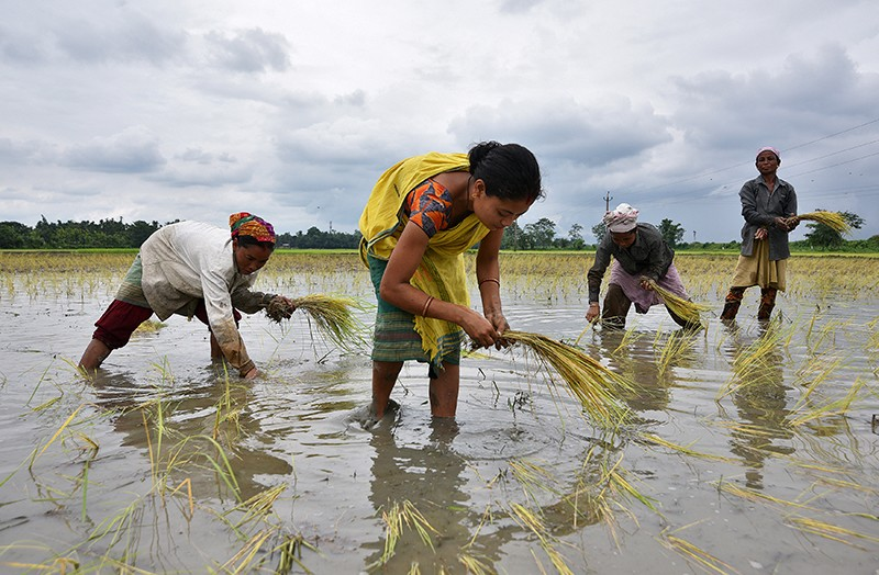 Four women plant rice saplings in a watery paddy field in India