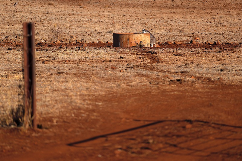 A kangaroo drinks water from a tank in the middle of a barren, drought-effected paddock in NSW.