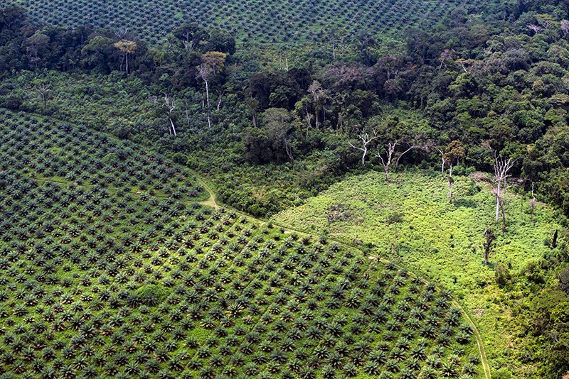 Aerial view of a palm oil plantation in the Democratic Republic of the Congo