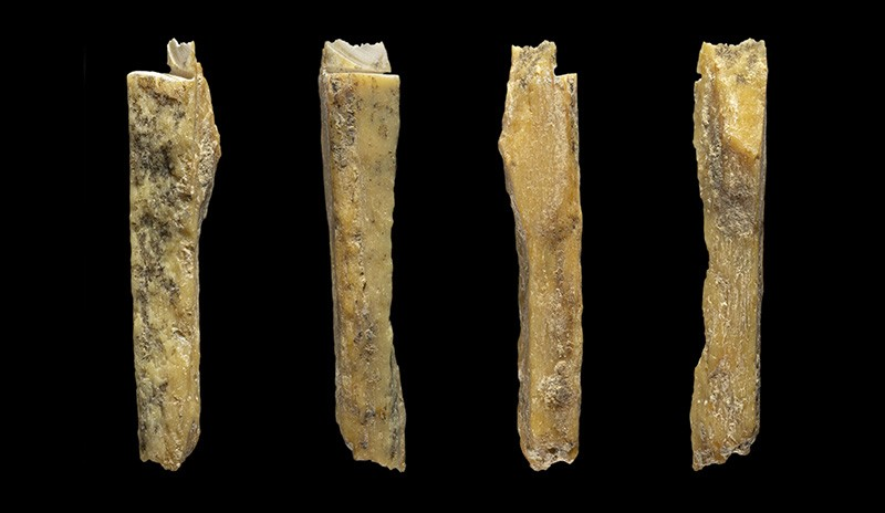 4 Different views of a new hominin bone from the Denivosa cave (Denivosa 17).
